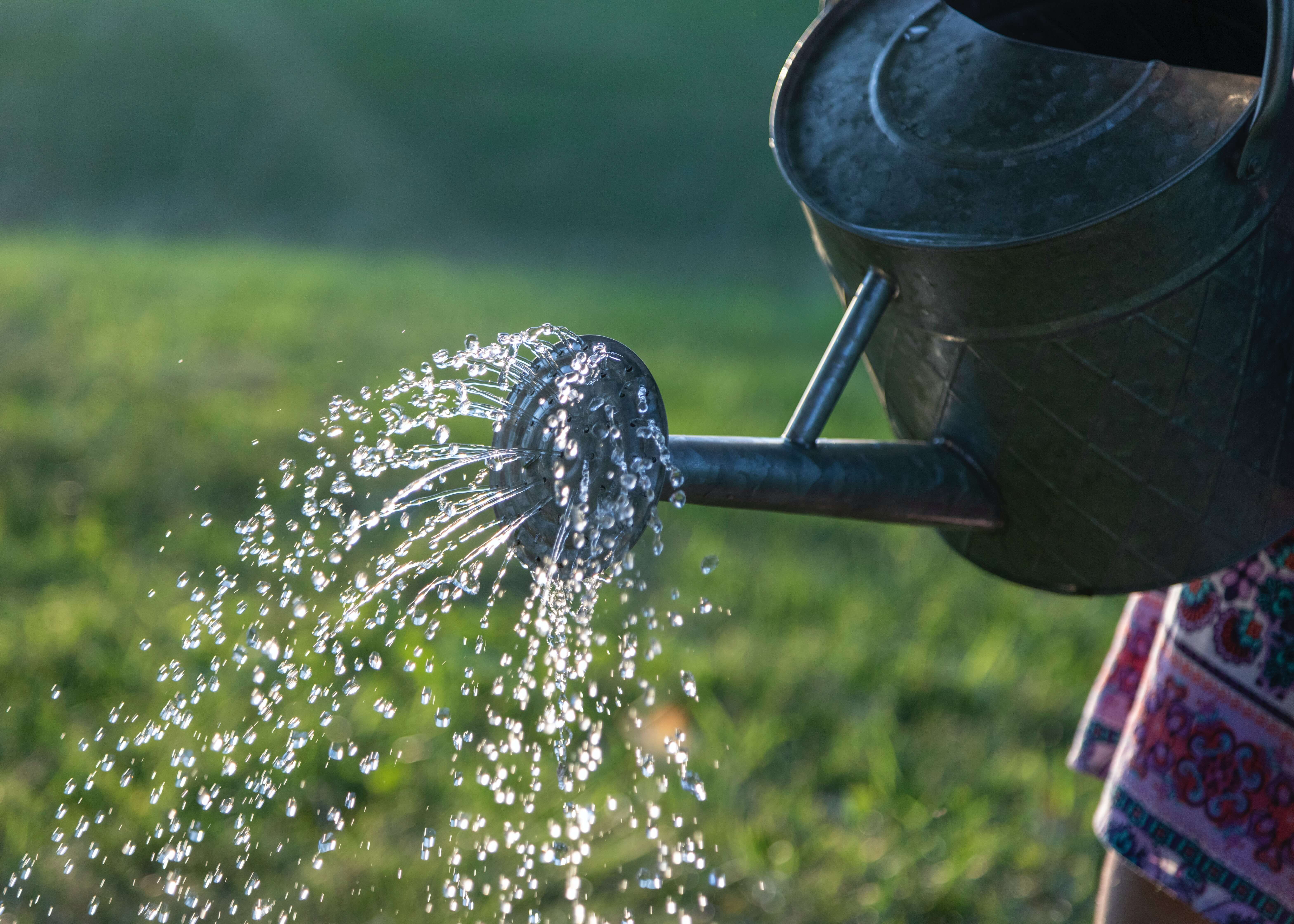 Watering can in action - watering