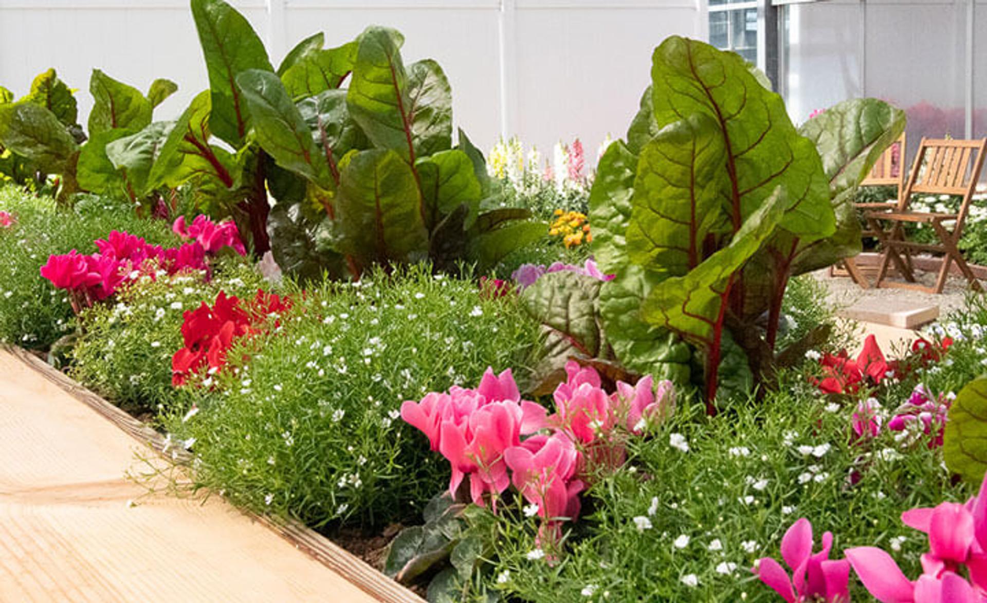 Make garden beautiful